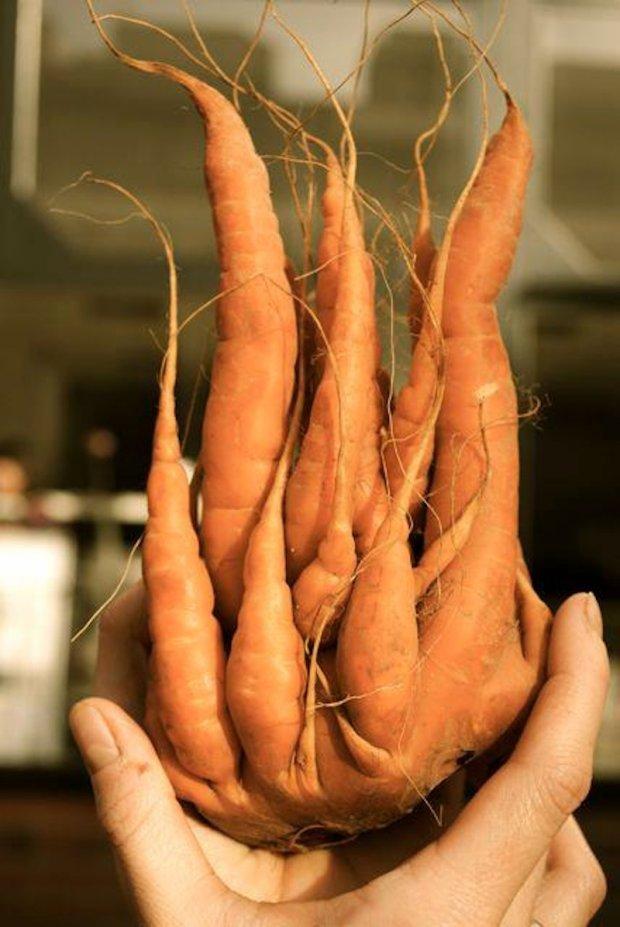 CarrotMisfit