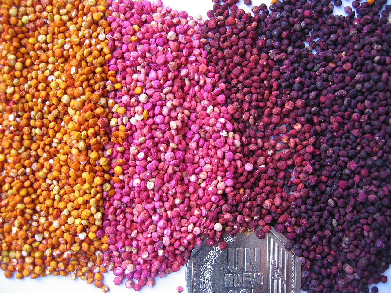 Colored_quinoa
