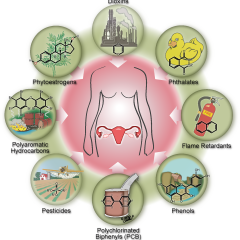 Early Menopause: Links to Ubiquitous Endocrine-Disrupting Chemicals