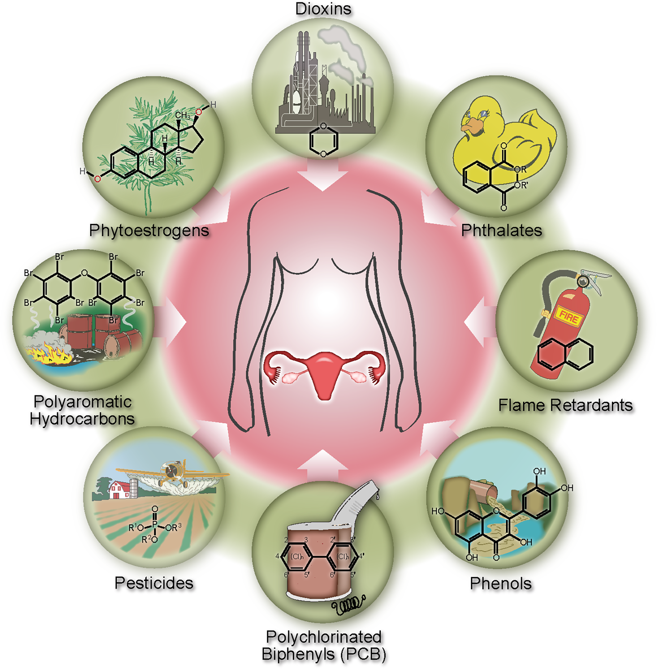 foto The Dangers of Endocrine-Disrupting Chemicals